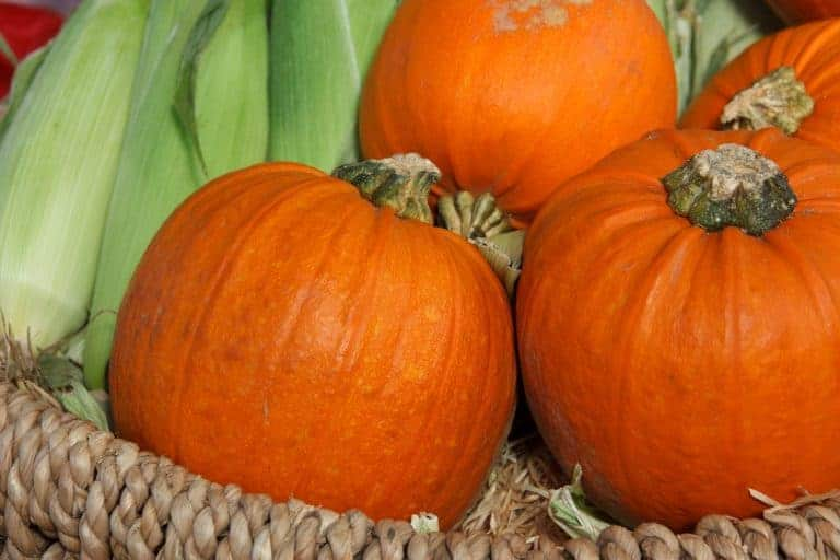 The Pumpkin Patch Parable: Book Review